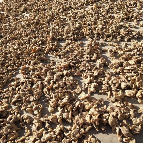 小白芨多少钱一斤?2020年种植行业前景如何?