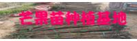 """""""亚热带水果中的王者""""芒果的栽种常见问题详细介绍!"""