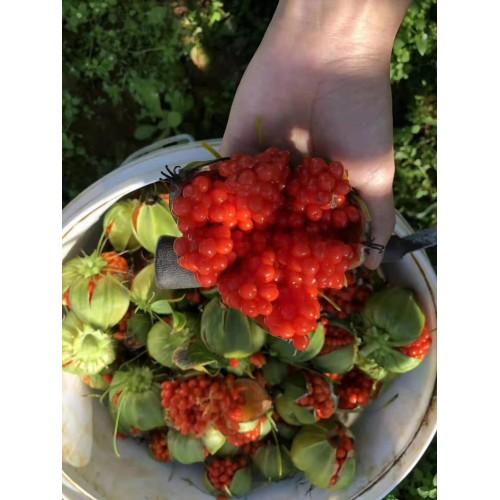 重楼種子是多少一公斤?栽种两年能够 获得?附栽种效益评估