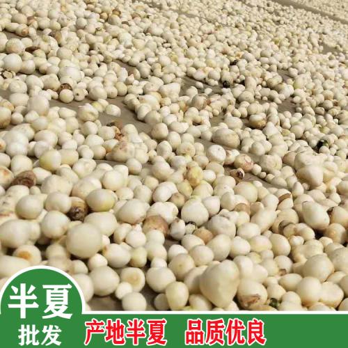 旱半夏栽种亩产量多少斤