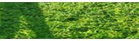 百部种植有哪些要求_百部适合的温度在多少