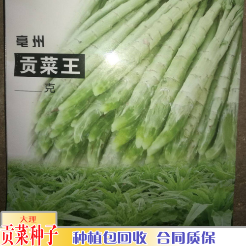 文山贡菜种植在那里_种植贡菜需要多少温度
