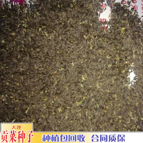 贡菜的亩产量_贡菜的品种