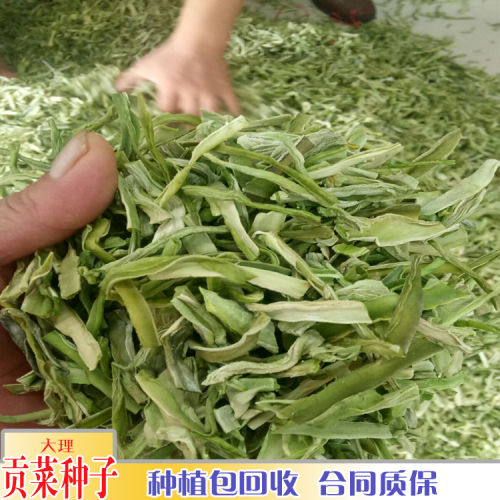 贡菜多少钱一斤_贡菜种子的价格