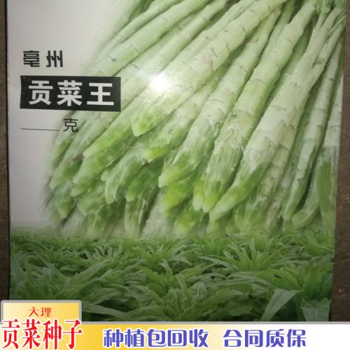 贡菜种植多久可以收获_贡菜防冻吗