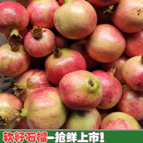 软籽石榴新鲜水果种类