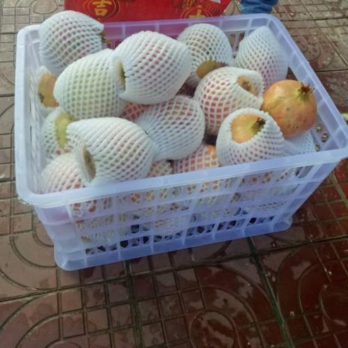 玉溪石榴种植几年收获_石榴在什么季节种植