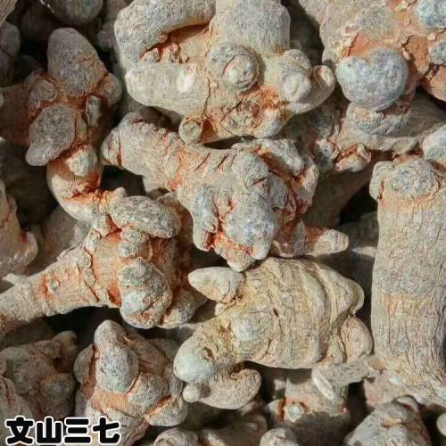 文三七|湖南永州市文三七市场价格