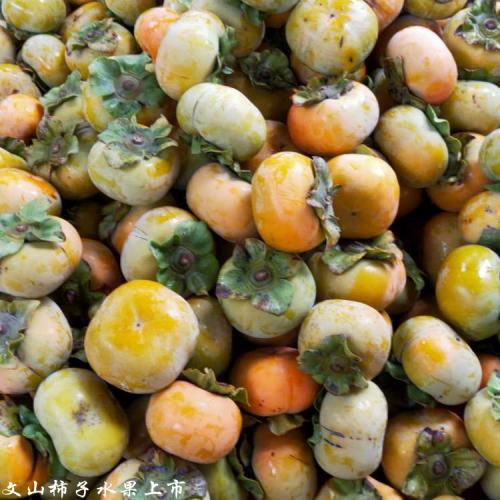 甜柿子种子种苗_甜柿子种苗繁育技术