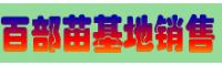 近期百部广西玉林市价格怎么样?(附百部药材小苗图片)