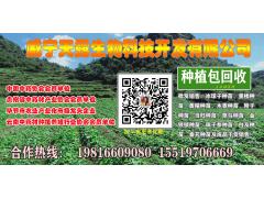 药材种苗销售 种植包回收厂家 贵州威宁材种植管家