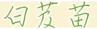 紫花白芨苗 云南曲靖市会泽县白芨苗供应