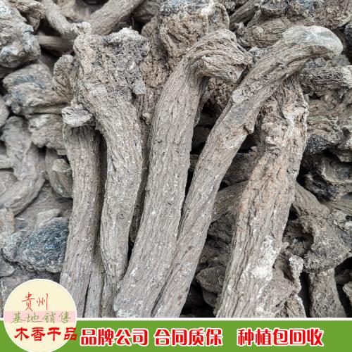 木香 广西玉林市玉州区木香价格行情