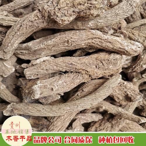 木香 安徽亳州市木香批发价格行情