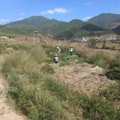 突尼斯软籽石榴种植基地_软籽石榴苗如何栽培
