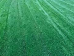 昆明安宁文芳草坪种植基地