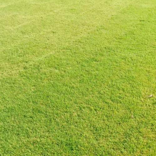 草坪种植户_现在种什么草坪效益好