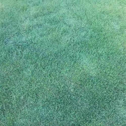 草坪防病治疗方法有哪些_草坪批发销售基地