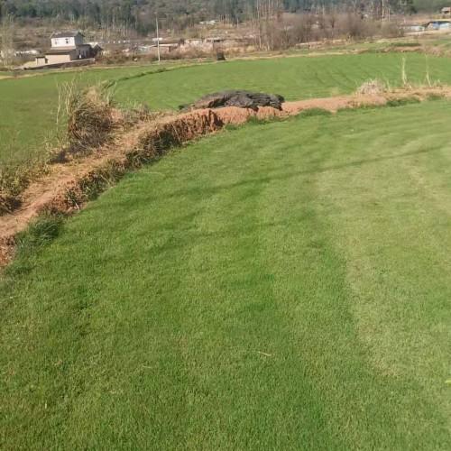 草坪种植需要施什么肥料_草坪管理技术及种植方法