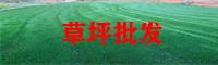 玉林绿化草坪批发厂家_鱼缸种植草坪技术