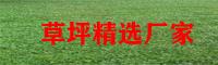 贺州草坪行情价格_草坪目前前景怎样_草坪种植基地
