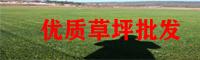 来宾草坪管理技术_草坪怎样养护_草坪种植技术有哪些