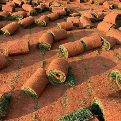 高品质草坪果岭草種子种植技术有什么?草坪要多少钱一平方?