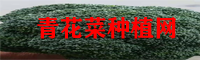 青花菜价钱表_青花菜行情查询网