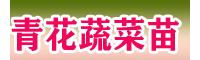 云南正宗青花蔬菜苗