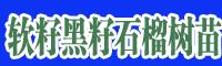 滇泽王黑美人石榴枝条 软籽黑籽石榴树苗
