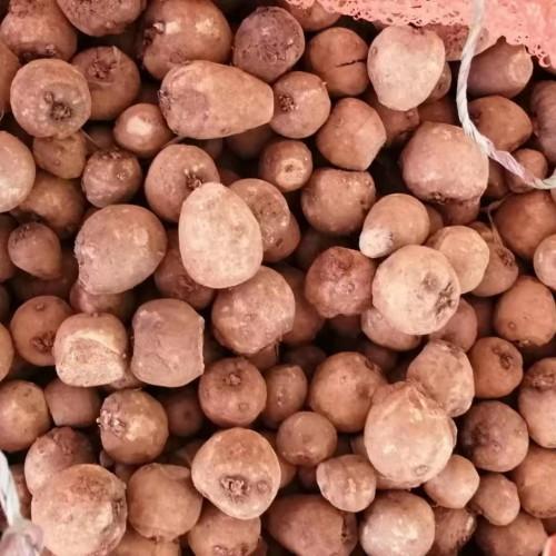 基地出售2吨优质花魔芋二代种子(附图)