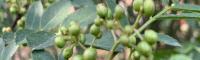 花椒50亩需要投资多少钱