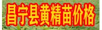 黄精种苗 云南保山市昌宁县黄精苗价格