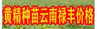 黄精种苗 云南禄丰黄精种苗批发价格