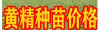 云南文山黄精种苗图片