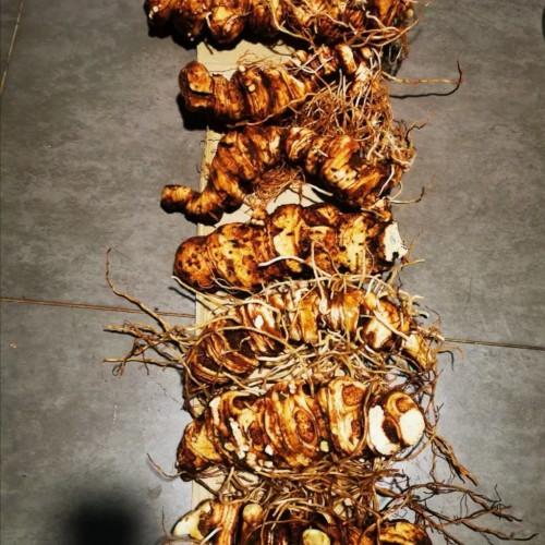 滇重楼种植技术 滇黄精、白芨、食用菌- 会泽林下种植有限公司