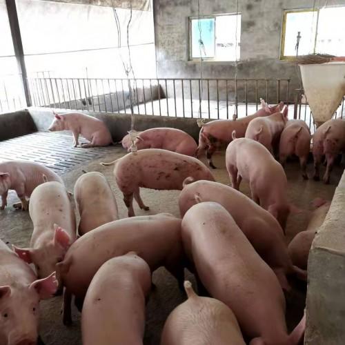 下半年猪肉价格可能出现阶段性快速上涨!