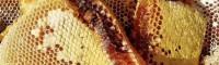 云南蜂蜜多的地方|云南黑蜂蜜多少钱一斤|