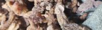 怒江云南滇黄精种苗出售 黄精小苗叶子图片 西昌黄精苗价格