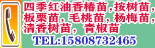 红河弥勒市徐金红香椿种植合作社